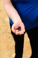 Blueberries - (c) Johan Conradson